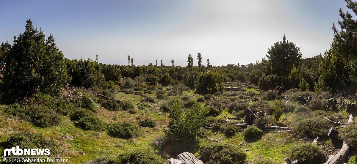 Die vielen verschiedenen Klima- und Vegetationszonen machen El Hierro extrem abwechslungsreich