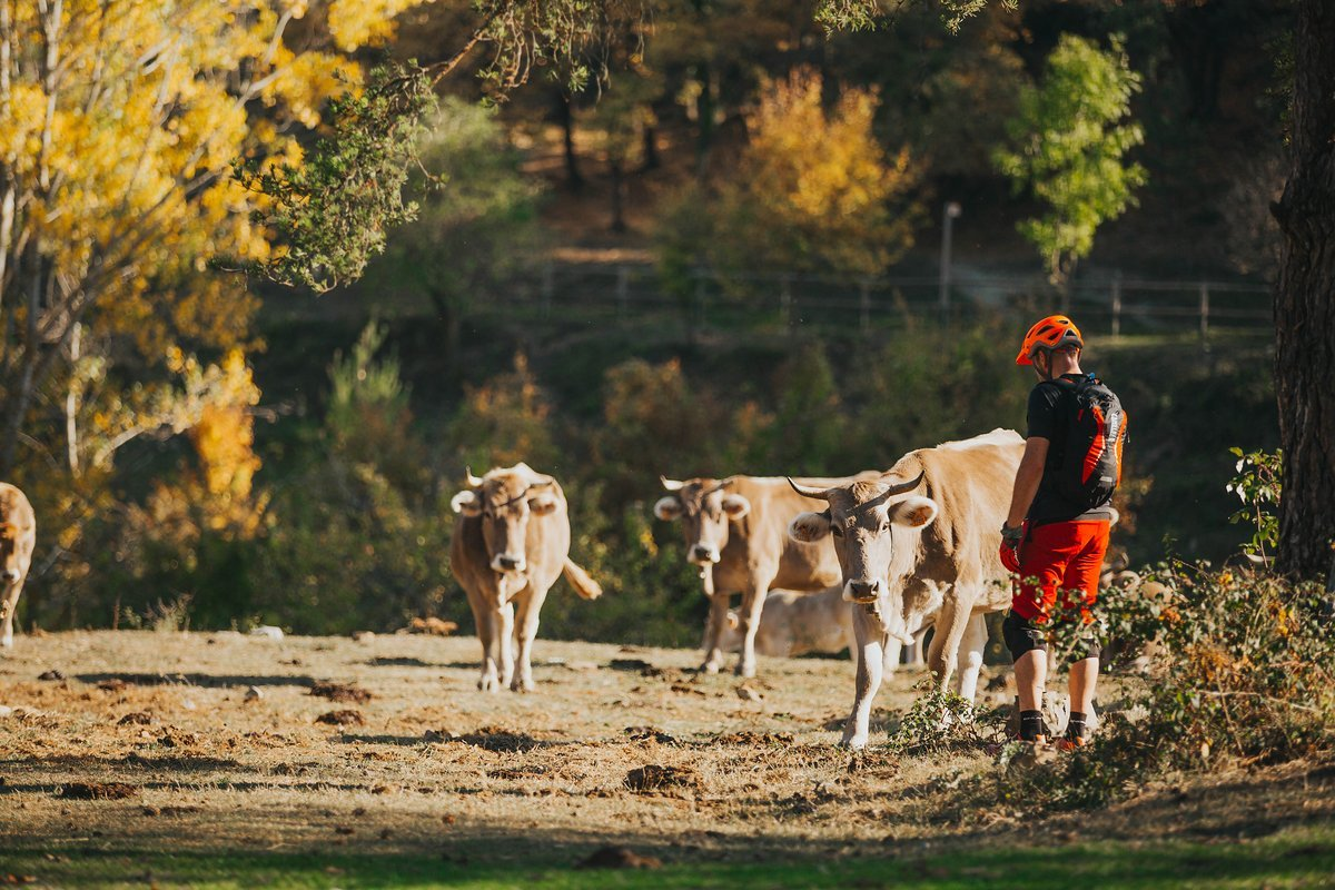 pyrenees-orientales-altitude-adventures-mtb-outsideisfree-nick-cows