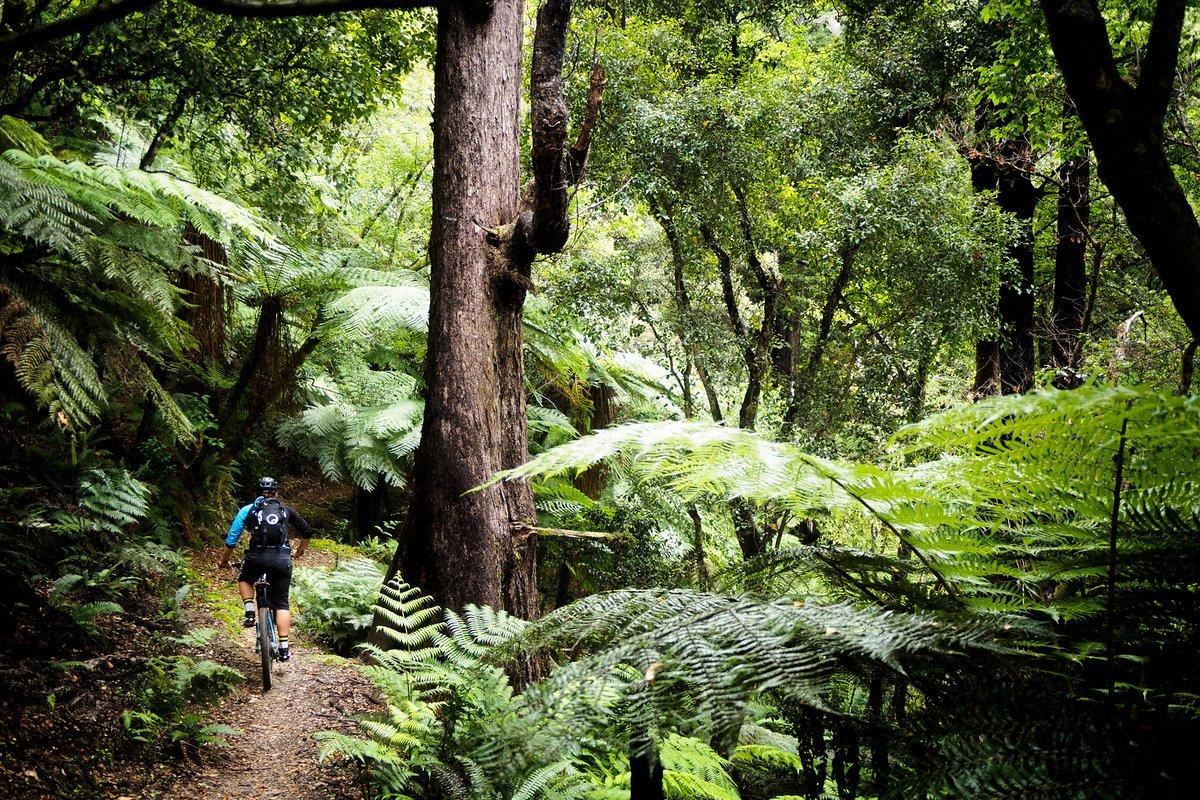 Ines Canyon-Teamkollege Justin Leov führt uns durch tiefen Dschungel