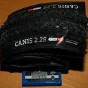 Onza_Canis_120.jpg