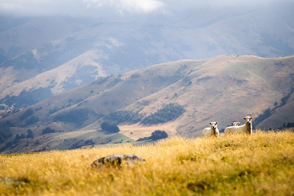 Nicht alle können die Aufregung nachvollziehen, als wir auf der Bank Peninsula das erste mal in NZ aufs Rad steigen