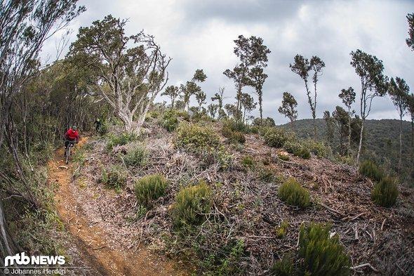 Flowige Trails in traumhafter Landschaft …