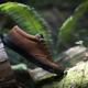 Das Brandon Semenuk Signature-Modell des etnies Jameson Mid Crank-Schuhs ist nun in einer neue braunen Version erhältlich.