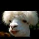 Lamao
